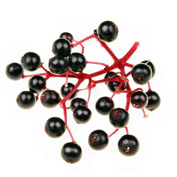 Black Elderberry Closeup