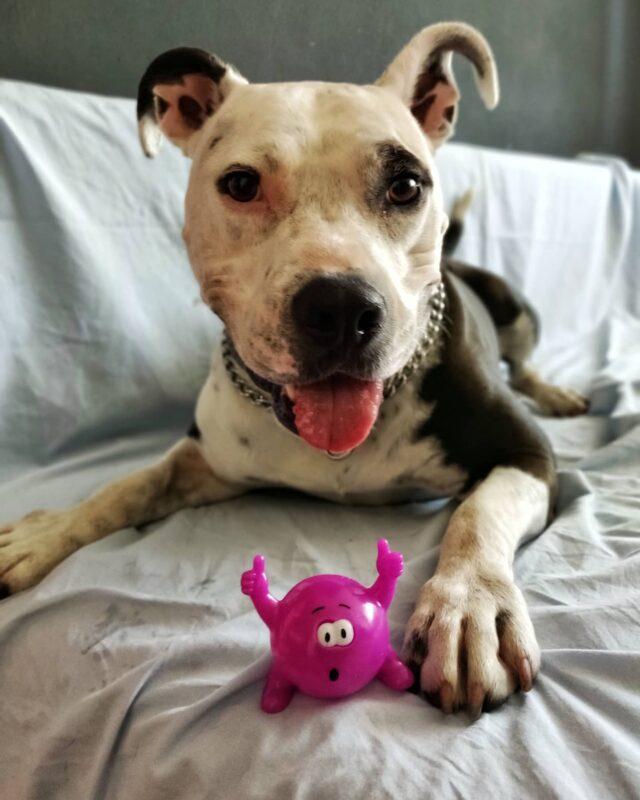 Motivația de luni? Să aveți o săptămână la fel de pozitivă și plină de energie precum este cățelul Mira! 💜 _____ #sambucol #sambucolromania #sambucolro #sistemimunitar #dog #dogsofinsta #dogs #lovelydog #romania